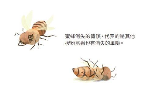 蜜蜂消失,首當其害的是瓜果類作物,因為瓜果幾乎都得仰賴蜜蜂授粉。 圖/天天里仁