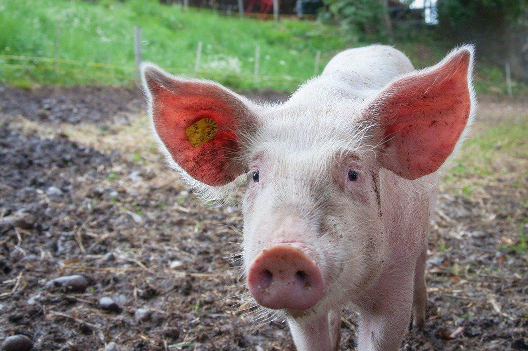 丹麥政府與企業早就已經展開因應的行動計畫,包括將禽畜糞便用於生產沼氣,更鼓勵可減...