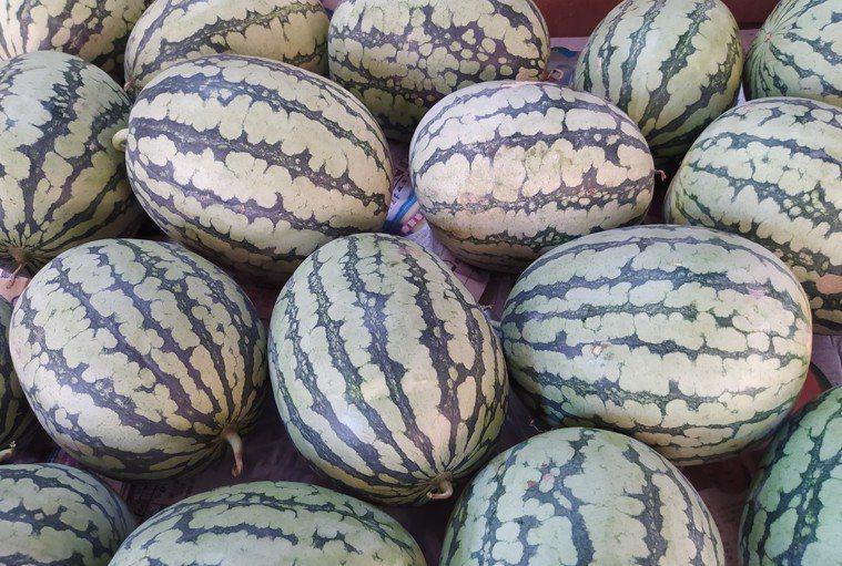 飯後來一盤西瓜,不但消暑,也是凝聚大家團結的一種溫暖力量。圖/Penny提供
