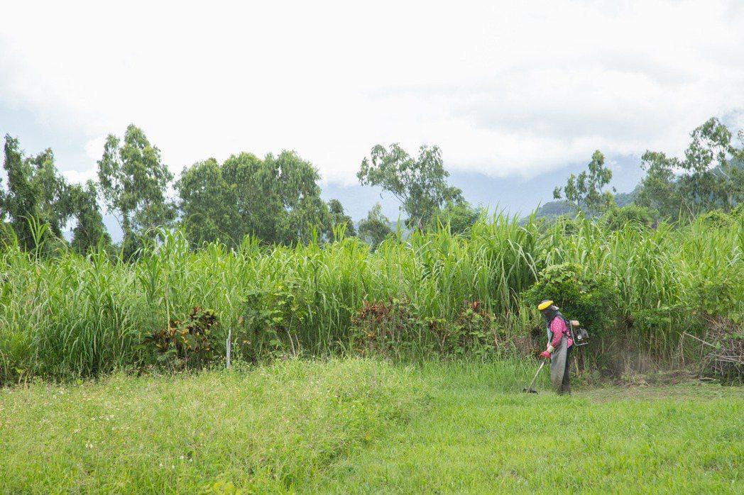 楊柏偉期待自己能為在地友善農法盡一份力。記者陳立凱/攝影