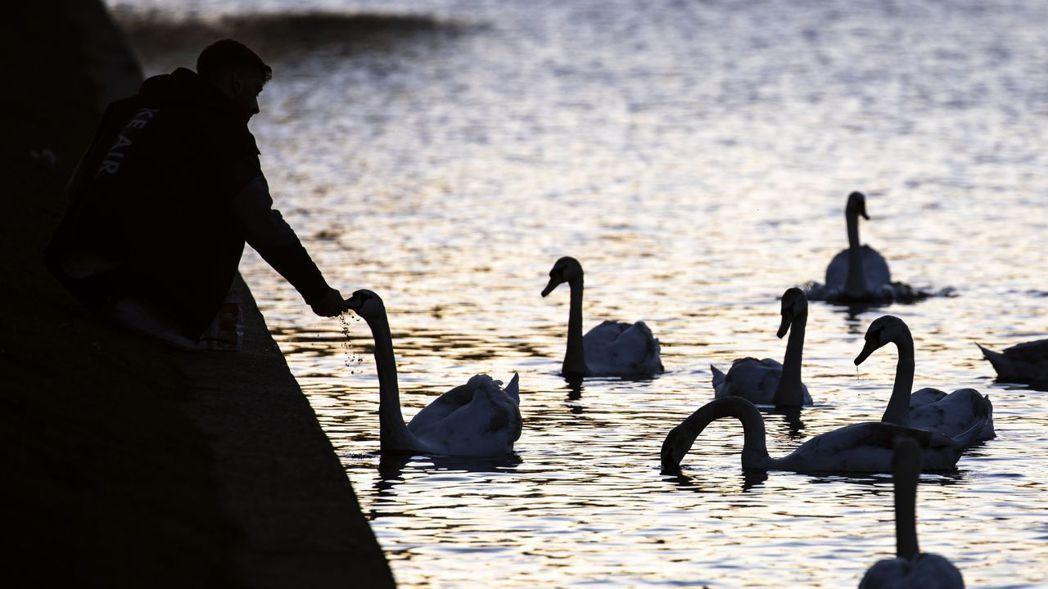 華爾街分析師認為,現在除非新的「黑天鵝事件」來襲,否則美國股市漲勢難以踩煞車。歐...