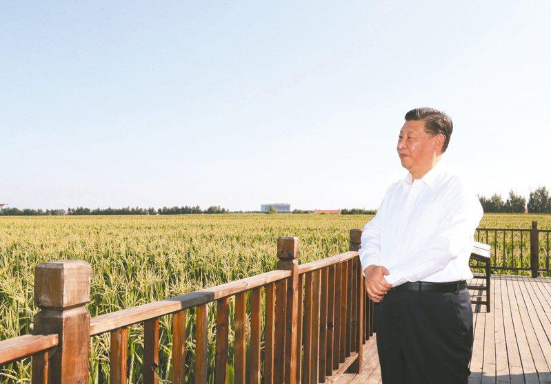 大陸國家主席習近平高調提出節約糧食。圖為習日前在吉林省視察農地。 (新華社資料照片)