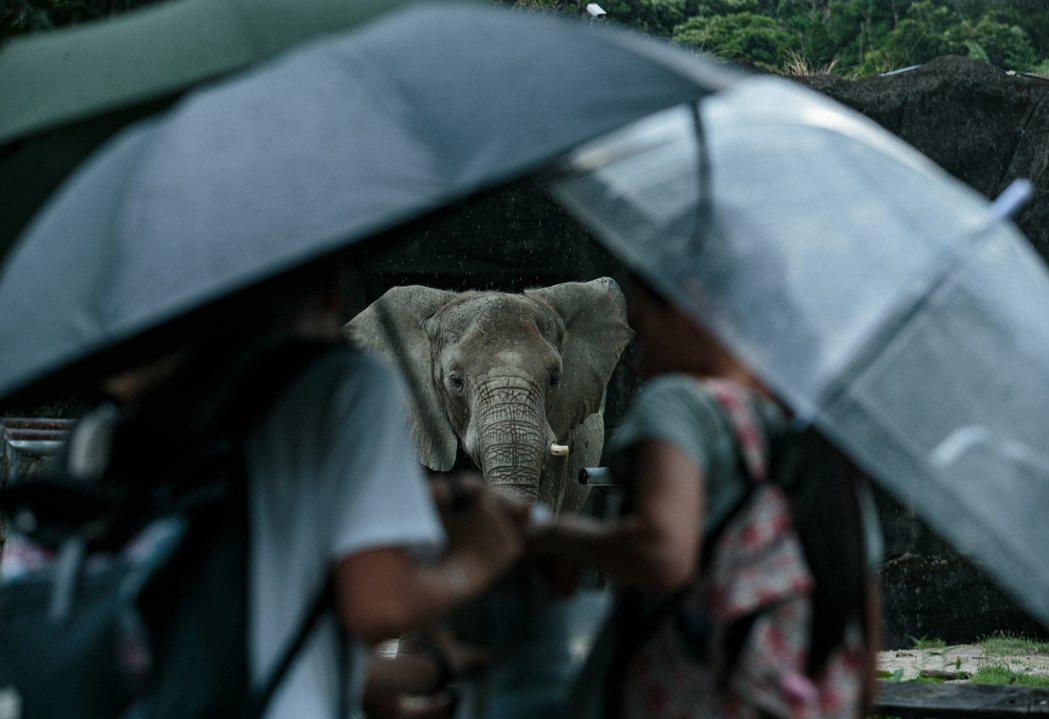 現代動物園宣稱具有教育功能,但事實上,動物園讓野生動物離開棲地,來到遊客眼前,卻...