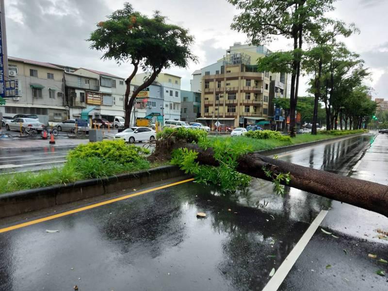 台南市北區安全島上路樹倒塌,造成女學生腳部輕傷。記者黃宣翰/翻攝