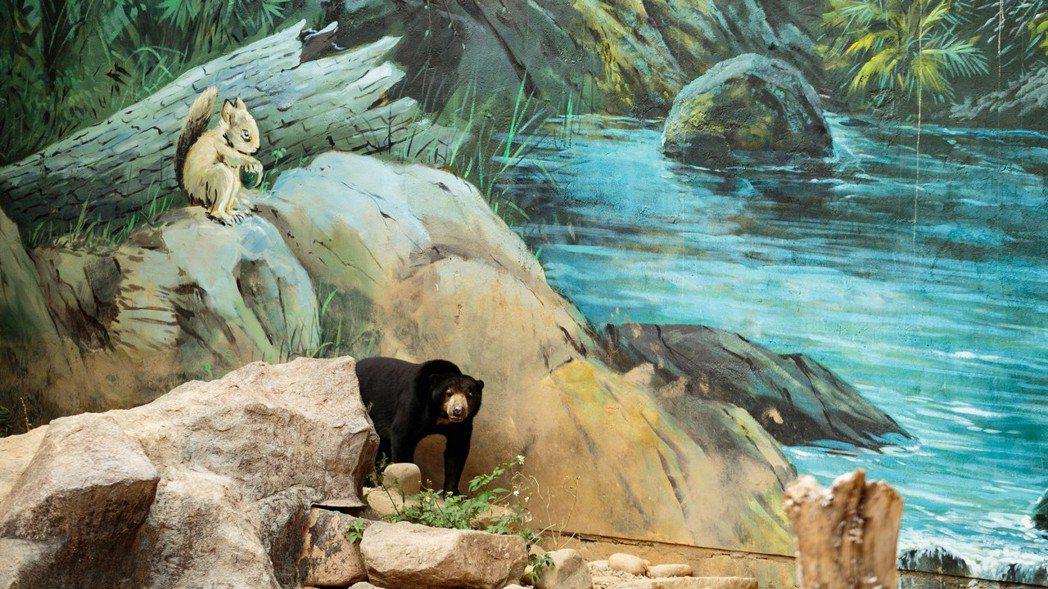 觀看動物很療癒,但更要看見牠們的哀愁。圖為新竹市立動物園的馬來熊。記者曾原信/攝...