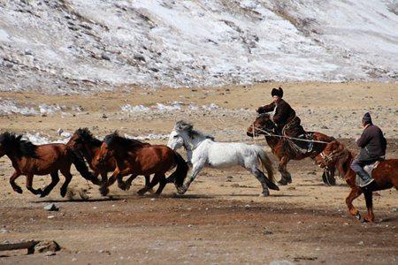 圖說:●牧民圈馬,讓我們見識到駕馭馬匹的高超技巧(照片/朱建銘攝影)