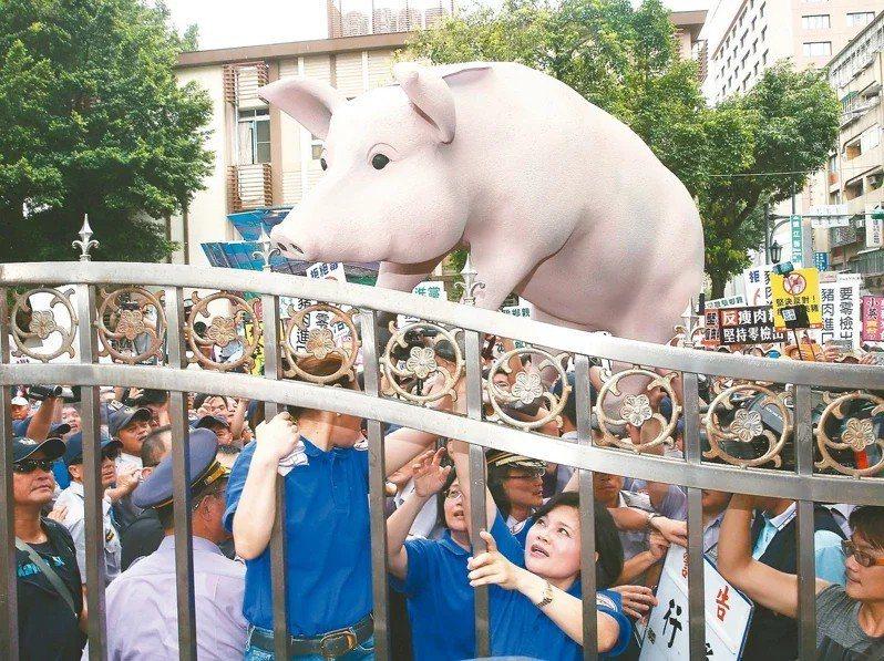 蔡政府今將宣布開放美豬。本報資料照片