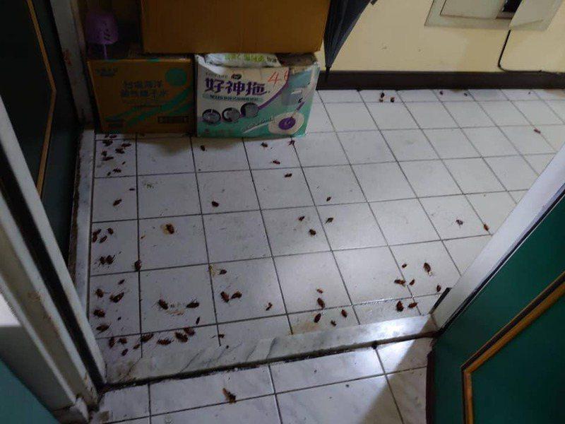 原PO大樓公共地板出現大量蟑螂和蟑螂屍體,令他相當困擾。圖擷自爆料公社二社