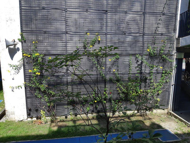 台南市環保局推動校園設置綠牆,除降溫、改善空氣品質,也提升教學品質。圖/台南市環保局提供