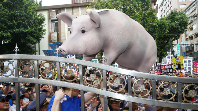 蔡總統宣布放寬美豬、美牛進口政策後,地方反彈愈趨強烈。圖為國民黨和豬農2016年...