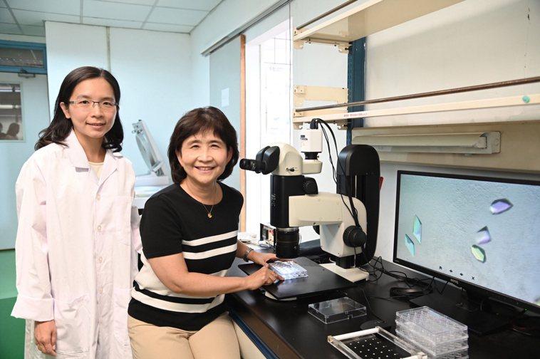 清華大學生資所教授孫玉珠(右)指導博士後研究員蔡佳吟培養膜蛋白晶體。圖/清大提供