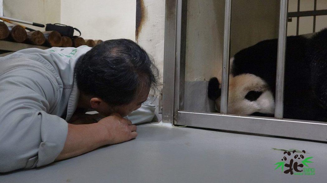 為了觀察「圓圓」情況,保育員須趴在地上。圖/北市動物園提供