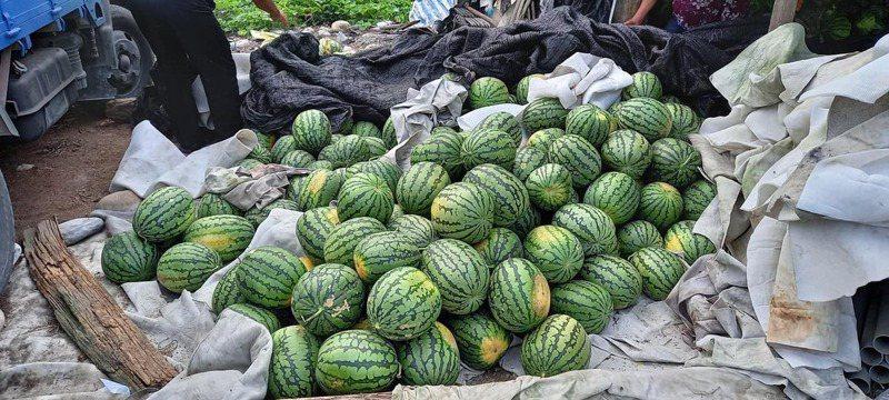 3、4千顆小玉西瓜遭盤商棄單,78歲鍾姓瓜農只好暫時將西瓜放置在田邊的工寮內。圖擷自花蓮同鄉會臉書