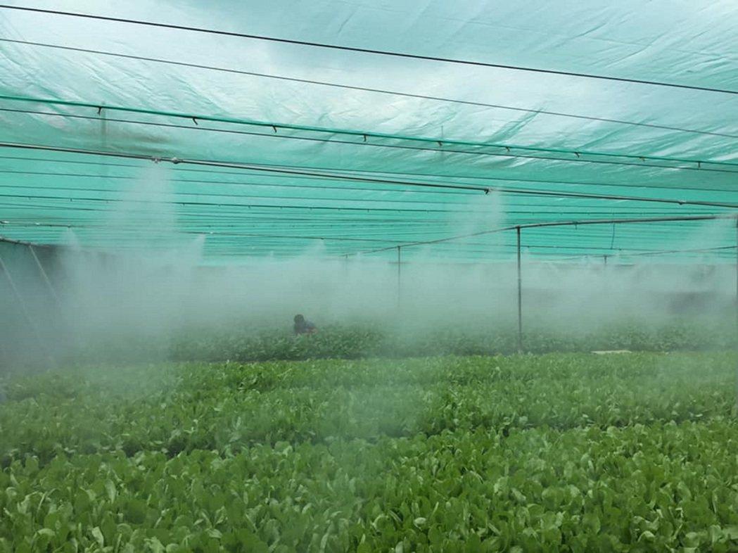 羽和公司推出的水霧降溫系統,使環境溫度明顯降低,營造蔬果良好的生長環境。 羽...