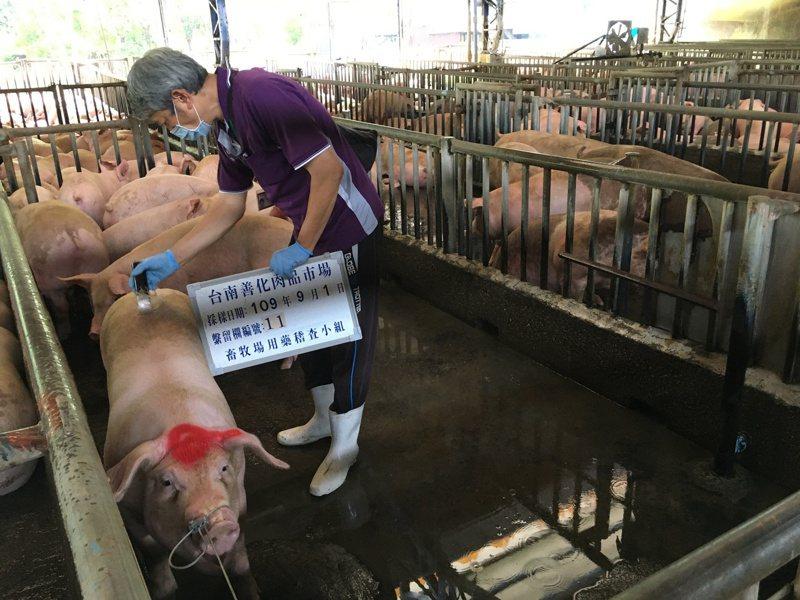 圖為台南市農業局動保處與中央畜產會動物用藥稽查小組,前往善化肉品市場抽驗豬隻受體素殘留情形。圖/台南市農業局動保處提供