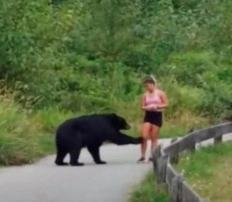 加拿大近來野生黑熊出沒不斷,上周又發生同樣事件,一名女性在登山慢跑時,一隻黑熊突然出現,還伸出熊爪摸女子的腿,驚險畫面全被拍下。路透/Storyful