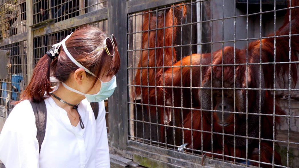 舒夢蘭赴印尼拍紅毛猩猩。圖/舒夢蘭臉書