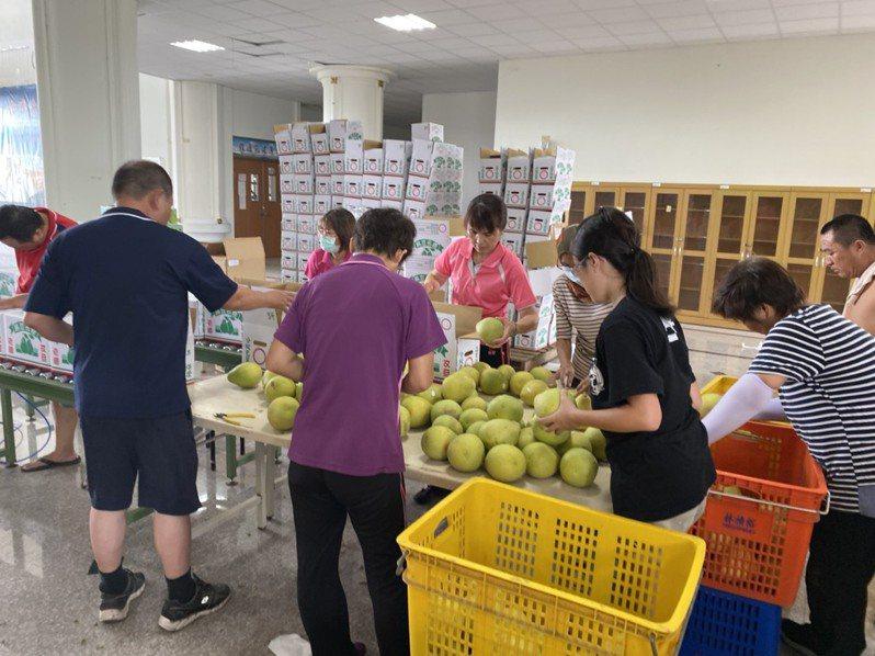 台南市農產運銷公司與台灣首府大學合作,利用閒置校舍作農產品加工作業區,目前正進行文旦禮盒包裝。圖/台南市農產運銷公司提供