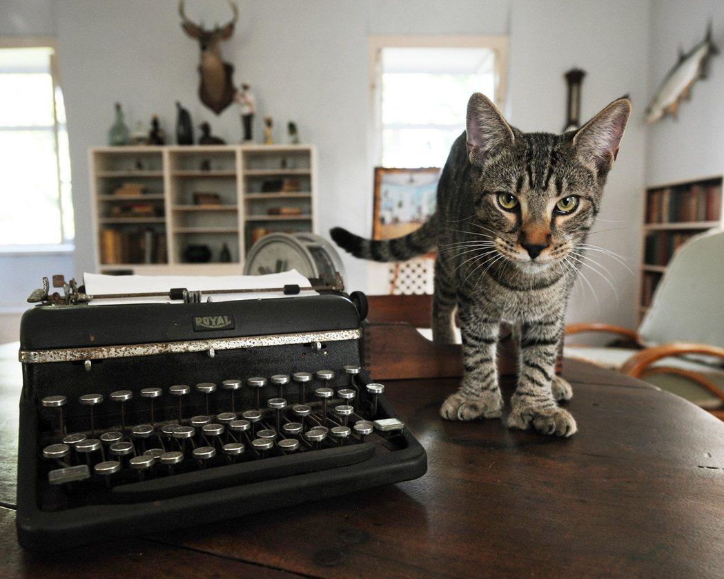 海明威之家其中一隻六趾貓,叫做「杜魯門」(Hairy Truman);海明威向來...