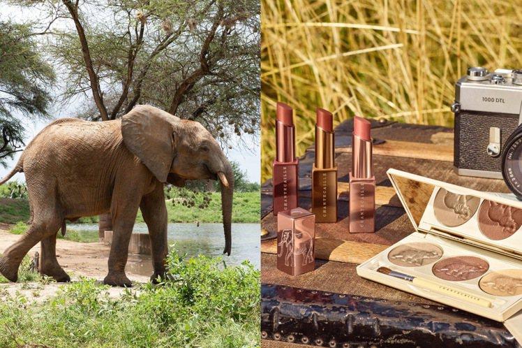 香緹卡推出非洲探索彩妝系列。圖/香緹卡提供