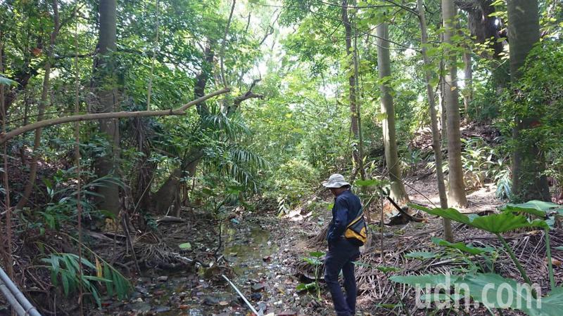 台南市南區哈赫納爾森林中的小溪。記者鄭惠仁/攝影