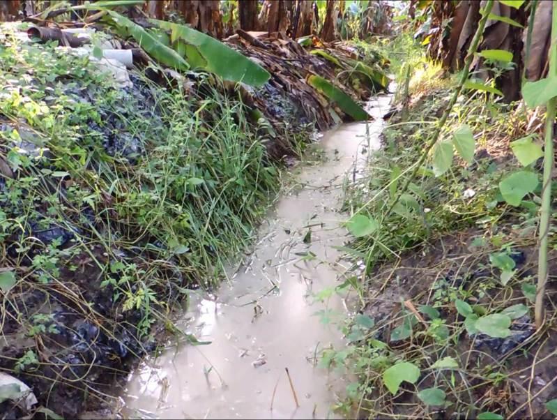 大雨過後,高雄旗山大林爐渣掩埋地又出現大量乳白色滲流水流經鄰近農地,地下水遭汙染的疑慮又起。圖/自救會提供