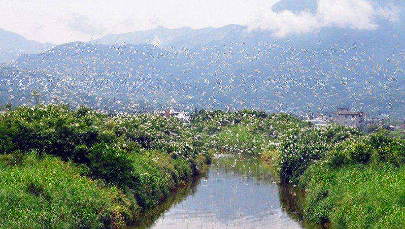 上萬隻鷺鷥過境北海岸,場面壯觀。圖/鄭惠啟提供