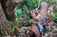 男砍樹被壓4天竟奇蹟生還 警透露他的身分成存活關鍵