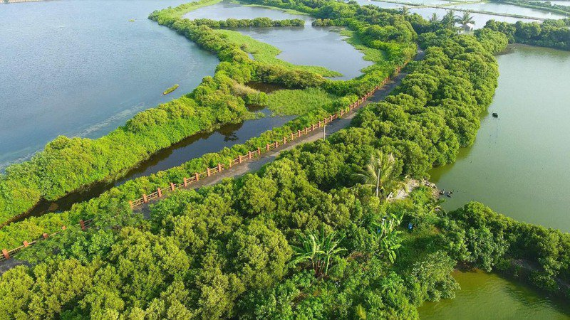 台南市南區四鯤鯓紅樹林區生態豐富,環保團體要求規畫為自然保護區濕地公園。圖/台南社大提供