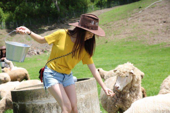 牧羊人體驗。 圖/清境農場提供