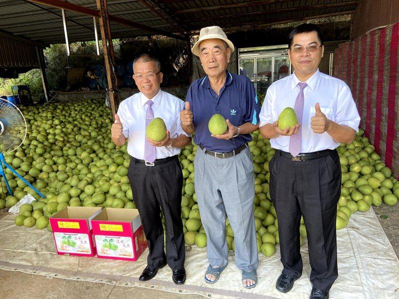 淡水文旦甜高水飽滿,每顆柚子都不灑農藥,使用套袋的方式來防蟲害,吃的健康。 圖/紅樹林有線電視提供