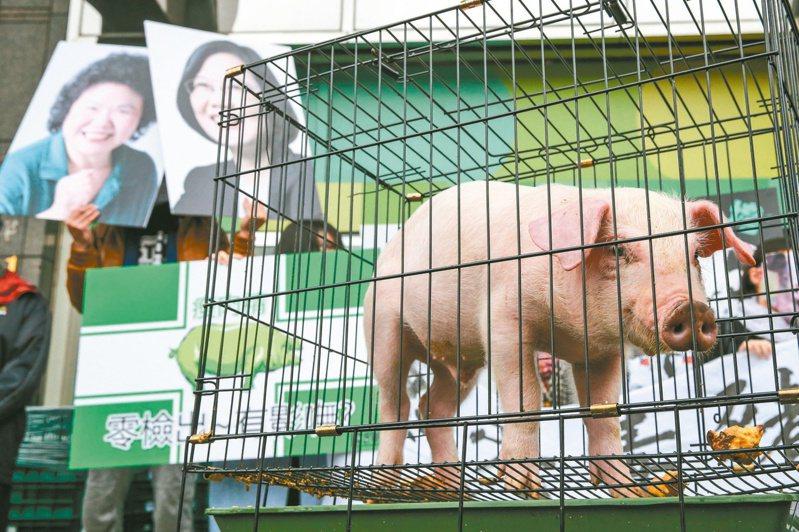 民進黨過去與豬農站在一起,反美豬牛,如今開放美豬牛進口,蔡政府表示是參考國際標準、守護國民健康,標準一直沒有變。圖/聯合報系資料照片
