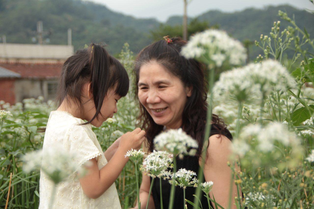 雪白花海吸引全家老幼一同出遊。 圖/幸福小晴天走跳全台灣提供
