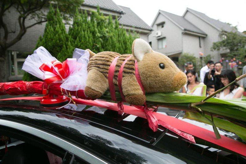 「小豬布偶」被綁在禮車上,取代古俗規定用來驅邪避凶的豬肉,畫面看來相當逗趣。圖擷自爆廢公社