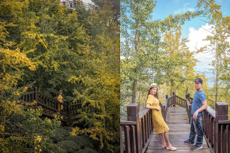 若從遠處側拍「武岫農圃」木棧道方向,搭上周邊黃綠交織的美景,讓人乍看就像隱身森林的精靈。圖/IG@sky09190授權