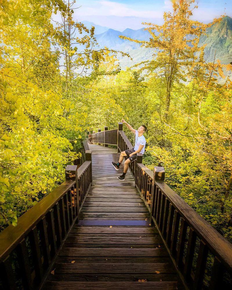 銀杏景觀步道被燦爛的花海包圍,若走到更頂端的觀景台,則能俯瞰空靈全景。圖/IG@taki788778授權