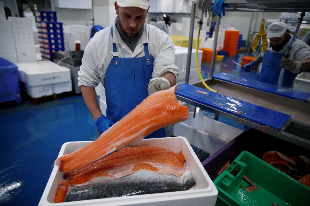 中國研究指出,新冠病毒能在冷藏鮭魚上存活超過一周。路透檔案照