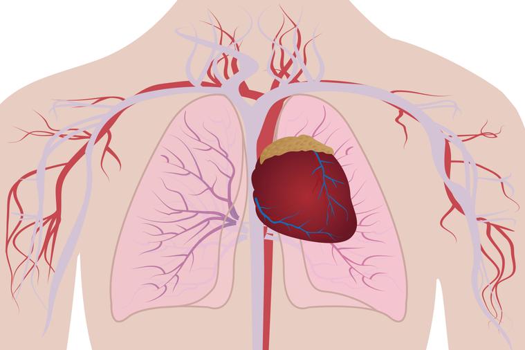 發生靜脈血栓的原因很多,包括受傷、開刀、懷孕生產、久坐或久臥不動、心臟衰竭、癌症...
