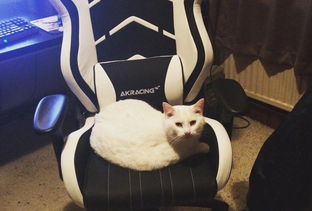 推特的回覆盡是貓貓搶占電競椅的照片/圖片截自Twitter@LesserMagi...
