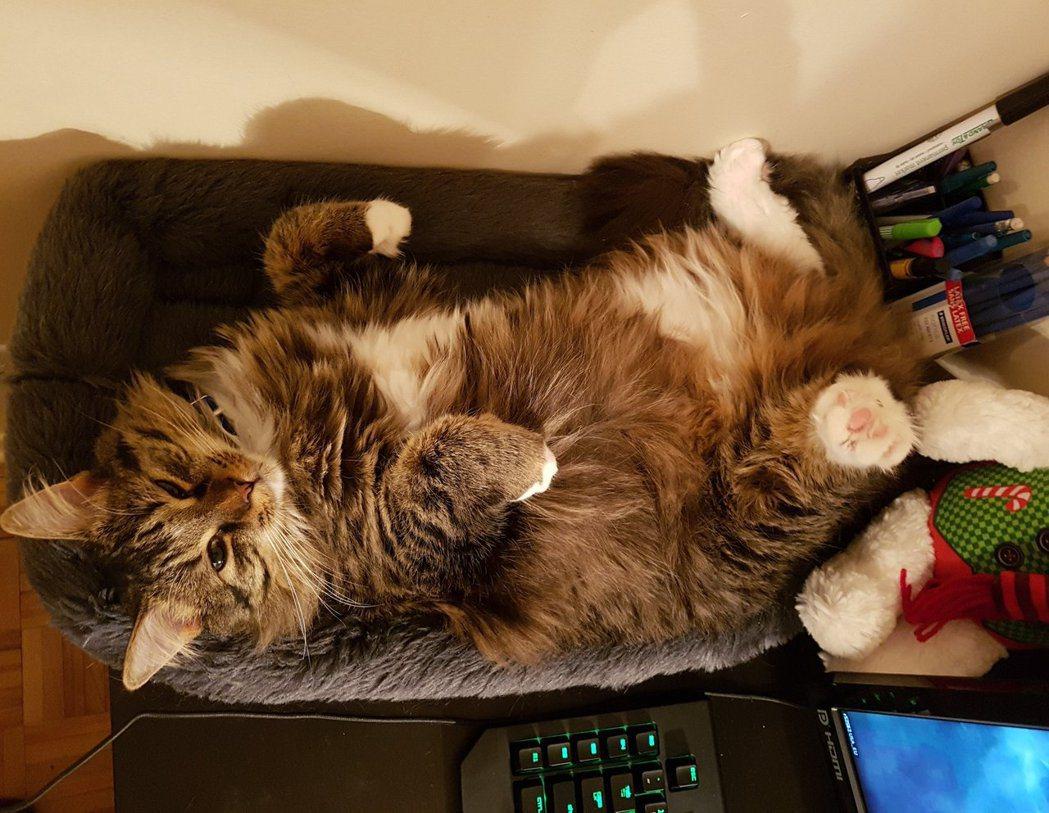 有人證實了這個做法確實有效,他的貓在電腦旁有自己的專屬座位,從來不會想去佔領電競...