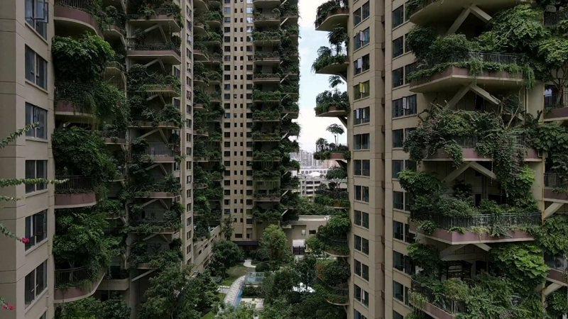 中國大陸四川省成都市新都區七一城市森林花園採用「垂直森林」理念,但大量植物引來大量蚊蟲,整個小區總戶數達826戶,交屋一年的實際遷入戶數僅10來戶。路透/Oriental Image