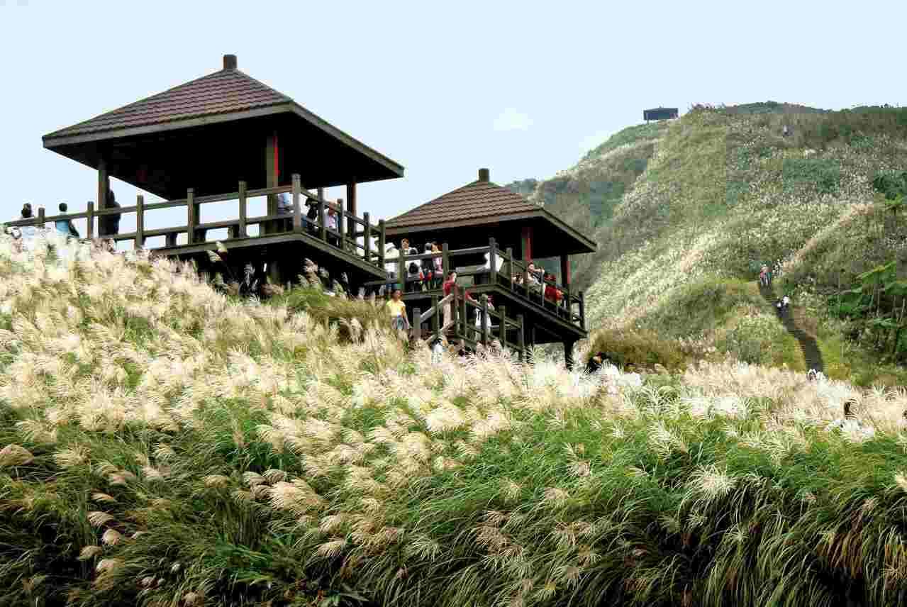 每年秋天「草嶺古道芒花季」吸引大批人潮登山。 圖/東北角暨宜蘭風管處提供