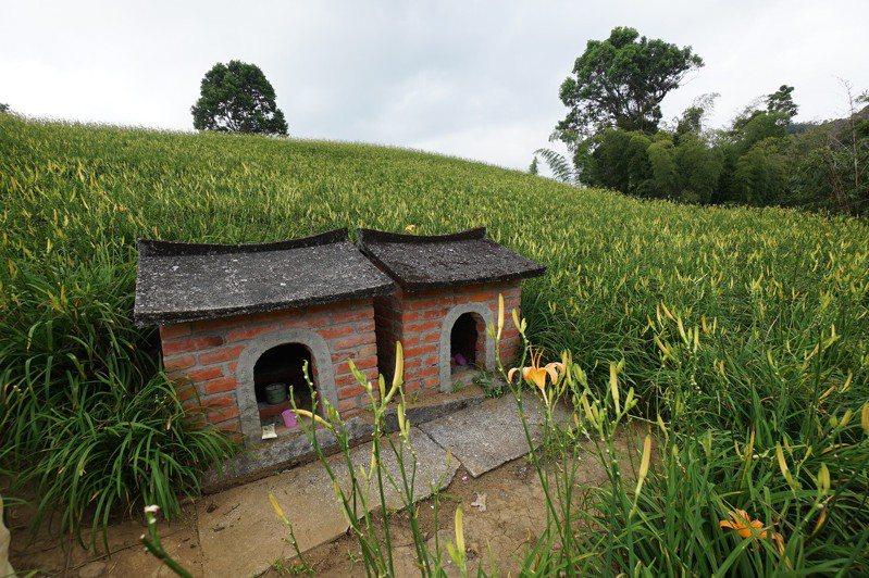 花蓮玉里鎮赤科山917農場有兩間迷你小廟,隱身金針花田間。記者王燕華/攝影