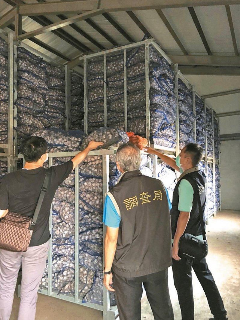 蒜價攀升,雲林縣調站調查是否有蒜農囤積哄抬,遭查的林姓蒜商無奈,否認囤積。圖/雲林調查站提供