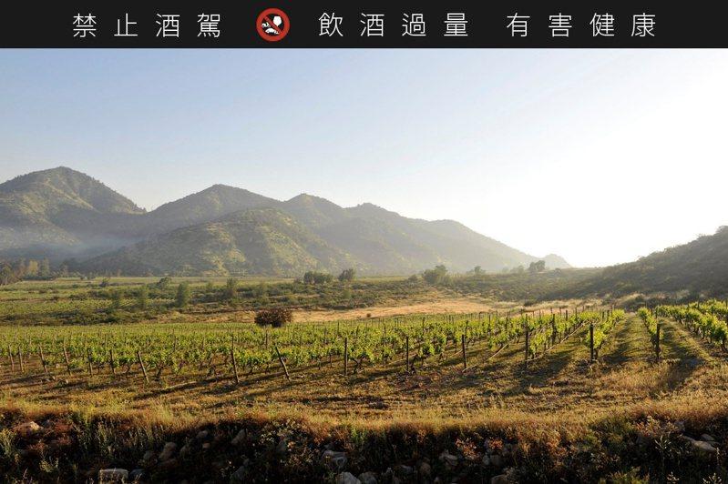位於智利Apalta Vally 區的Colchagua葡萄園,是世界一流的種植卡門葡萄的所在。圖/聖大力提供。提醒您:禁止酒駕 飲酒過量有礙健康。