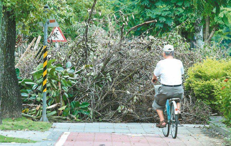 北市府擬刪除「樹高15公尺以上」的樹木列保條件,引發護樹團體反彈。 圖/聯合報系資料照片