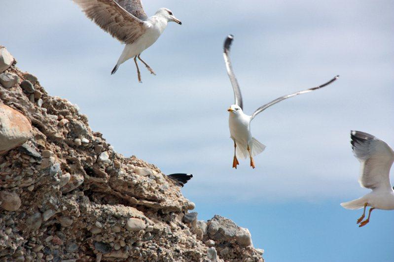 根據海鷗的行動,可以判斷未來走向。圖片來源/ingimage