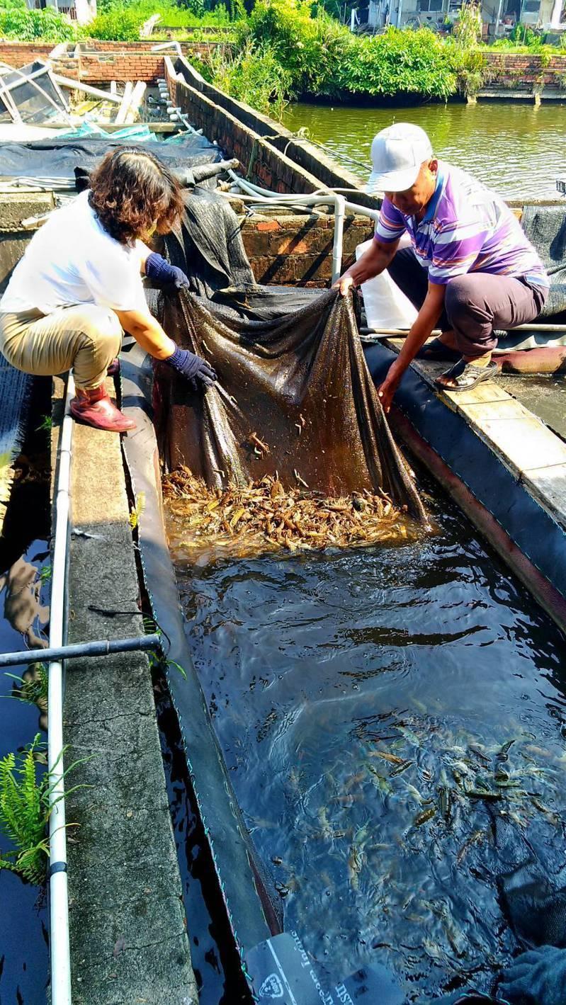 屏東縣動物防疫所疫人員針對染疫的蝦池進行檢測。記者陳弘逸/翻攝