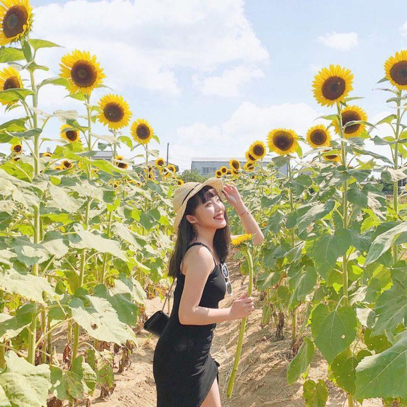 ▲向日葵花海景點推薦-向陽農場。 (圖/_chia.uu_, Instagram)
