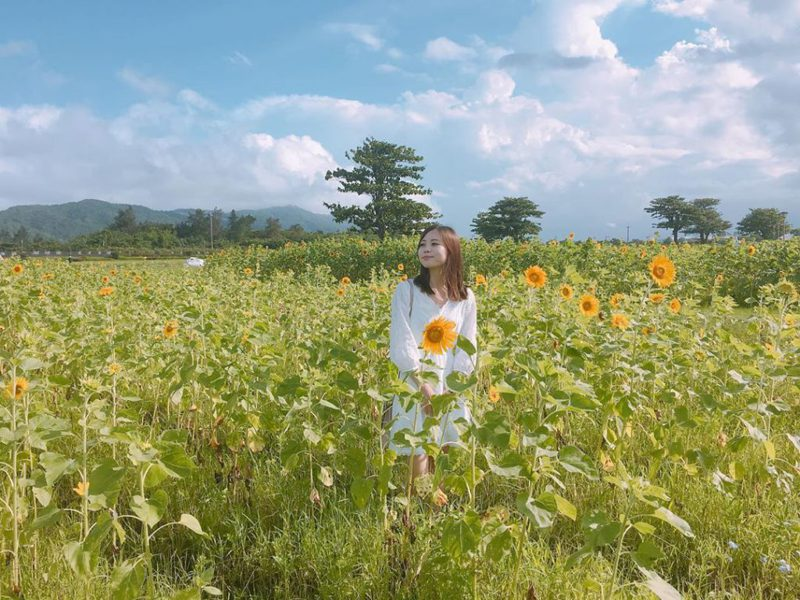 ▲向日葵花海景點推薦-台開心農場。 (圖/hsuan_indef, Instagram)